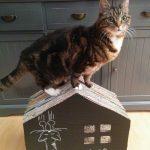 Katten krabhuis met krijtbord